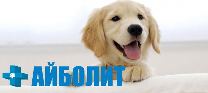 Айболит, ветеринарная клиника